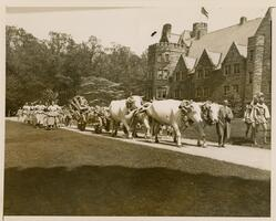 Parade on Big May Day 1932 led by white bulls